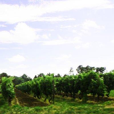 Bordeaux - Frankreich