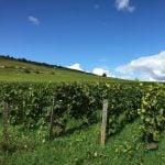 Chablis Weinregion