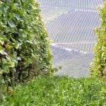 Chambolle-Musigny Weinregion