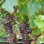 Valladolid Weinregion