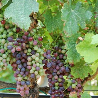 Valladolid Weinregion, Spanien