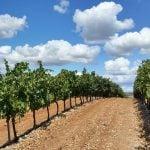 Rioja Weinregion