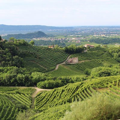 Weine aus Veneto, Italien