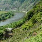 Pfalz Weinregion