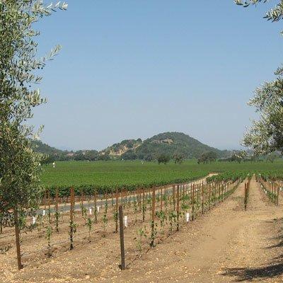 Wein aus USA, Napa Valley