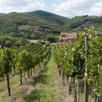 Chianti Weinregion