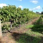 Eden Valley Weinregion