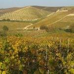 Langhe Weinregion