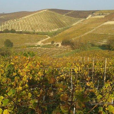 Weine aus Langhe, Italien