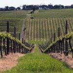 McLaren Vale Weinregion