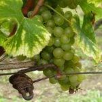 Bergerac Weinregion