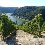 Rheingau Weinregion