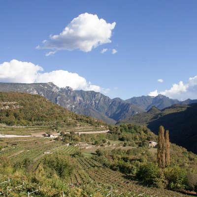 Weine aus Trentino