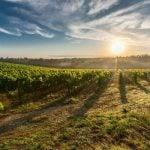 Bolgheri Weinregion