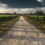 Carmignano Weinregion