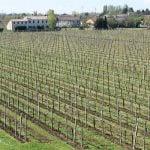 Valpolicella Weinregion