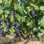 Ribera del Duero Weinregion