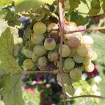 Salina IGT Weinregion