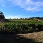 Barossa Valley Weinregion