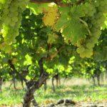 Hawkes Bay Weinregion