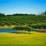 Weine aus Uruguay