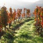Douro Weinregion