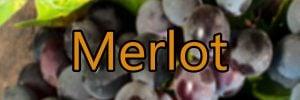 Wein mit Merlot Trauben