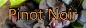Wein mit Pinot Noir Trauben