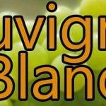 Sauvignon Blanc Trauben