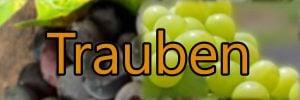 Reben und Trauben Sorten